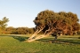 Tree-5th-hole-TGC