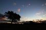 Tree-sillouette-sunset