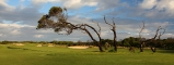 11th fairway trees The Sands